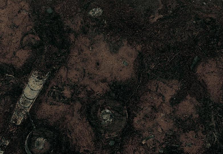 Столешницы Глянцевая линия - 323 Фоссиль антикато