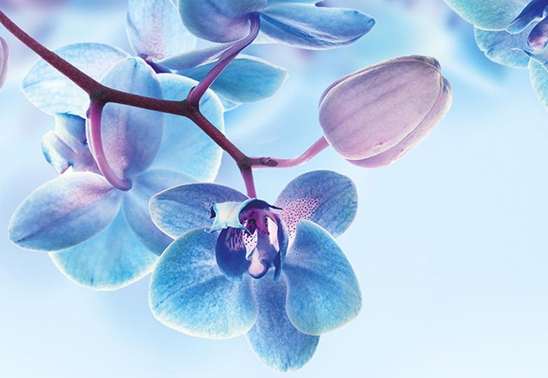 Стеновые панели Ламинат принт - 3066 Голубые орхидеи