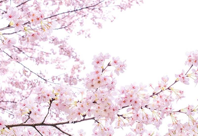 Стеновые панели Ламинат принт - 3084 Розовый сон
