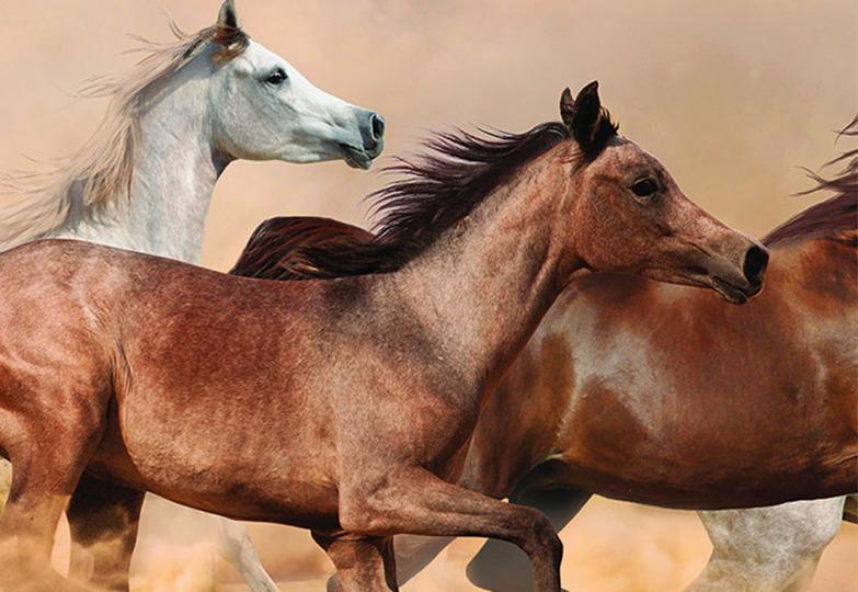 Стеновые панели Ламинат принт - 3067 Донские лошади